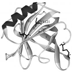 β-лактоглобулин